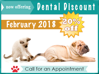 20% Dental Discount for Febraury 2018