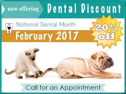 20% Discount on Pet Dental Cleaning Feb 2016