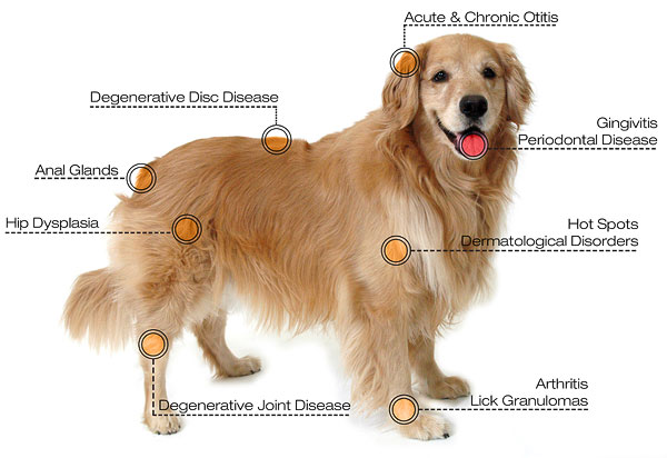 Photon Laser Therapy for Dogs