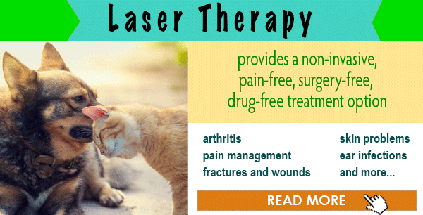 Laser Therapy Treatment for Pets