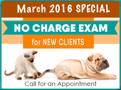 No Charge Exam for New Clients